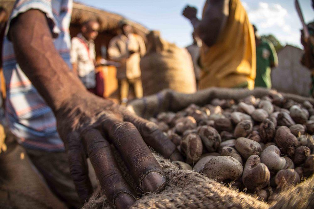 Mogovolas district, Nampula   province  – MozaCajú farmers learn to sell their raw cashew nut in groups as part of the commercialization process |  Produtores de MozaCajú aprendam a vender a sua castanha de caju em grupos como parte do processo de comercialização