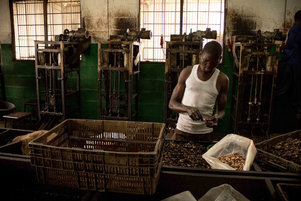 Anchilo district, Nampula province  – A worker at the shelling section of the Condor Nuts factory checks the discarded shells for remnant cashew nut |  Um trabalhador da secção de descascagem na fábrica da Condor Nuts faz a verificação das cascas