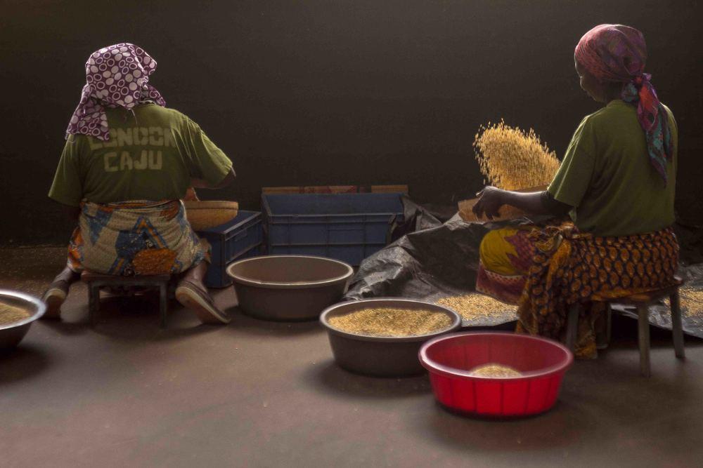 Anchilo district, Nampula province  – Two women in the Condor Nuts factory use the traditional method of cleaning and sorting the cashew nuts |  Duas mulheres na fábrica da Condor Nuts utilizam o processo tradicional de limpeza e selecção das castanhas