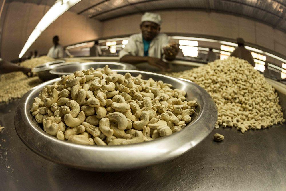 Anchilo district, Nampula province  – High quality whole cashew nuts at the Condor Nuts factory, waiting to be taken for packaging |  Castanha de caju de qualidade superior e também não partida na fabrica da Condor Nuts, antes de secção da embalagem