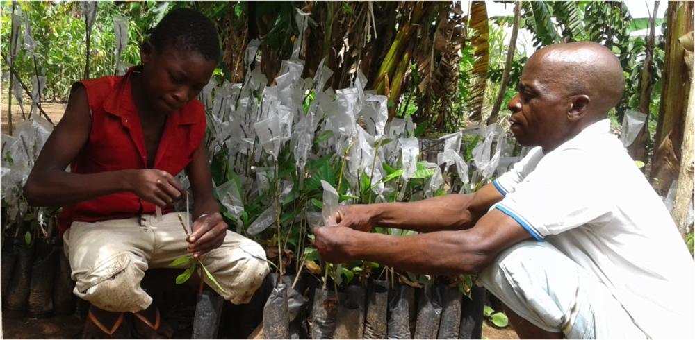Carlos Lássimo (right) teaches his son Adamo (left) how to graft seedlings
