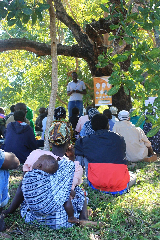 Angoche district, Nampula province  - MozaCajú promoter farmers are trained on various production techniques |  MozaCajú promotores são treinados em várias técnicas de produção