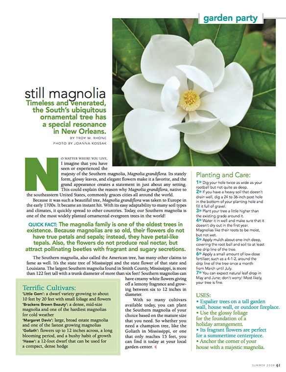 """Still Magnolia"" Flower Magazine Summer 2009"