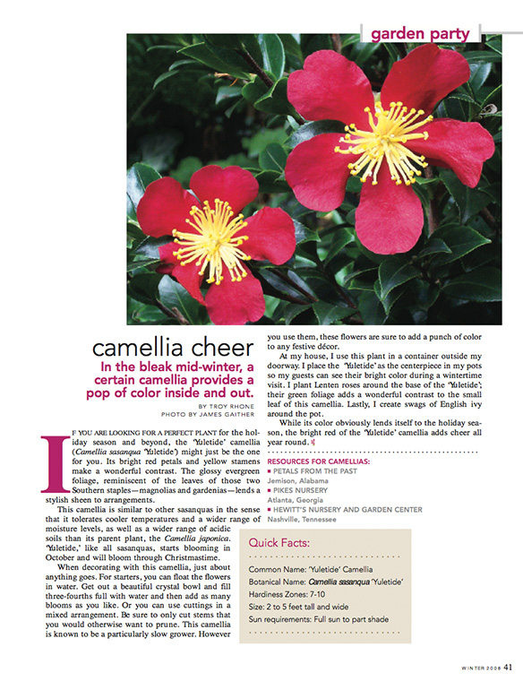 """Camellia Cheer"" Flower Magazine Winter 2008"