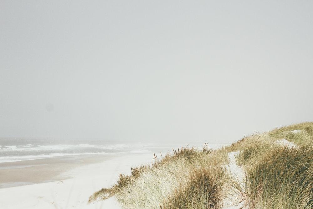 sea grass + sand dunes