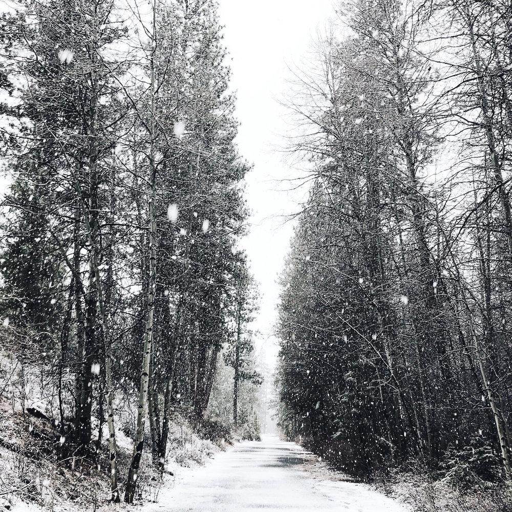 shevlin snow