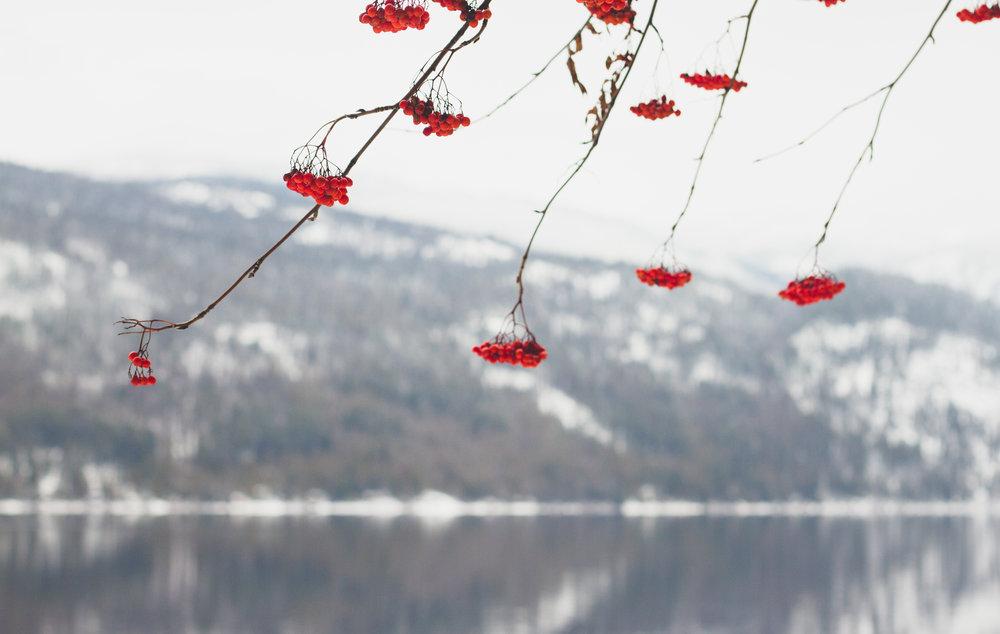 lake.01.02.19.jpg