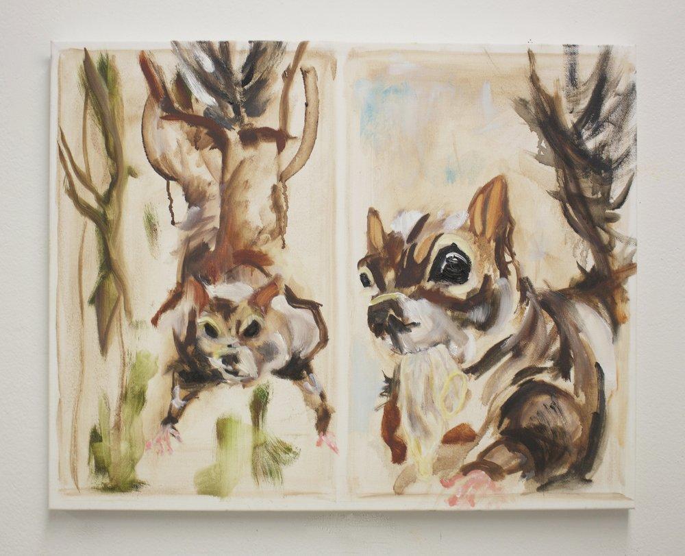 Squirrel (Animal Perverts)