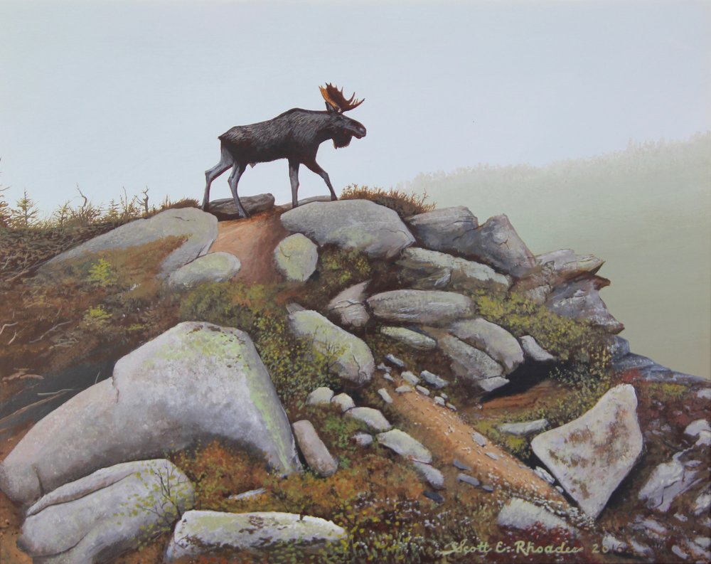"""Crested Moose 11"""" x 14"""""""