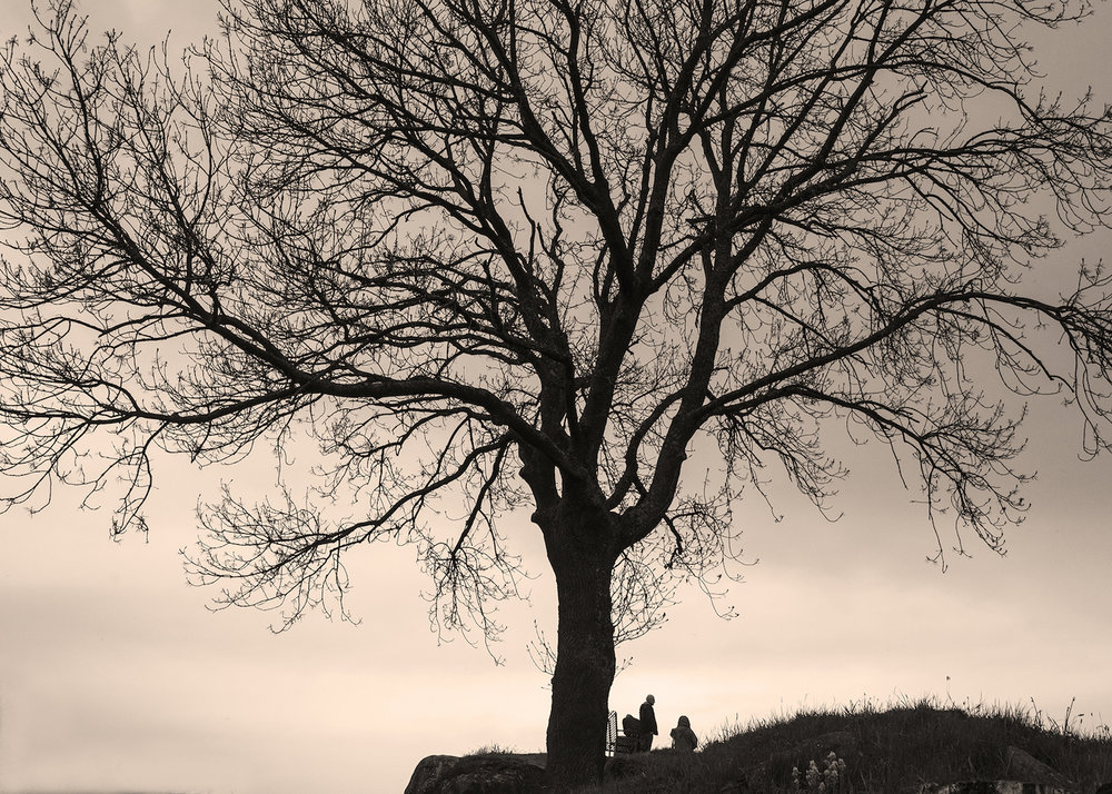 Tree in a Scottish Graveyard
