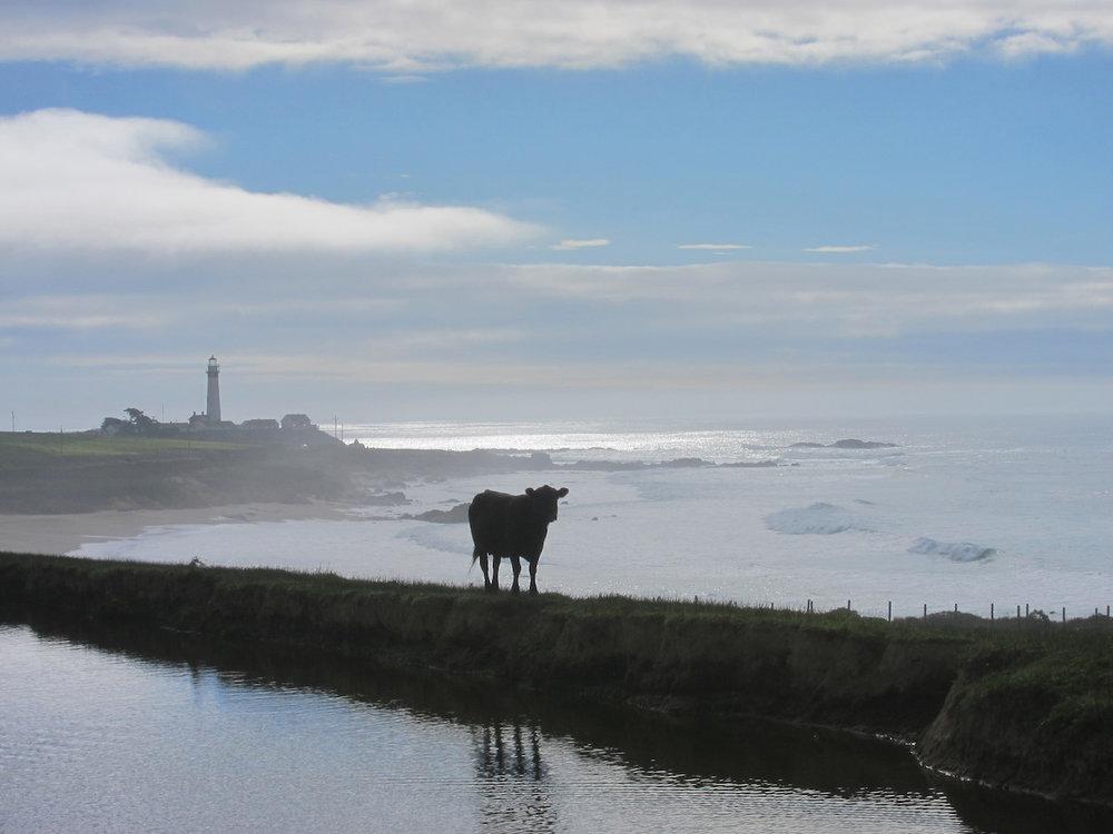 cow_sea.jpg