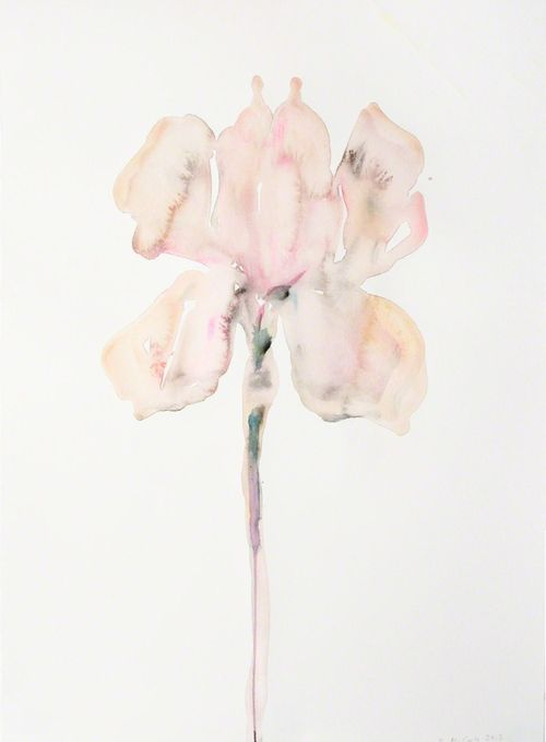 Kim McCarthy   Pink Iris, 2013  Source: http://gallowhill.tumblr.com/post/65553680517/kim-mccarty-pink-iris-2013