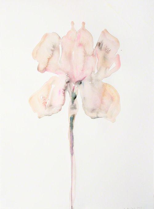 Kim McCarthy Pink Iris, 2013 Source:http://gallowhill.tumblr.com/post/65553680517/kim-mccarty-pink-iris-2013