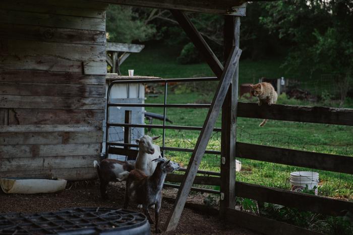 Farm Fresh_The Pinwheel Collective-44.jpg
