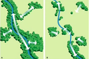 More connectivity means fewer barriers to dispersal or migration.