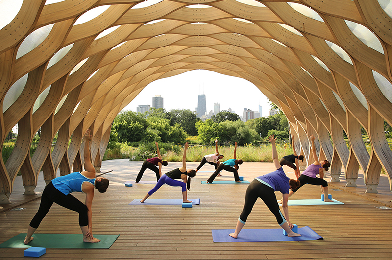 yoga at lincoln park zoo chimpanzees in context