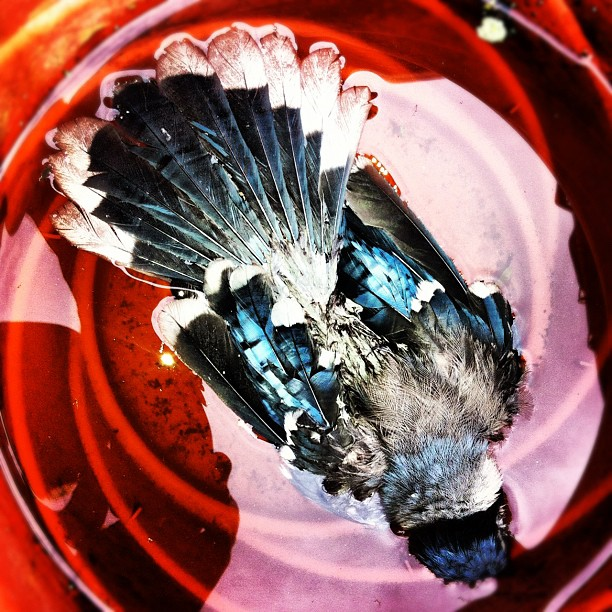 """Nevermore (Dead Bird)"" | Justin K. Hite | J:10 Studios | www.justinhite.com"
