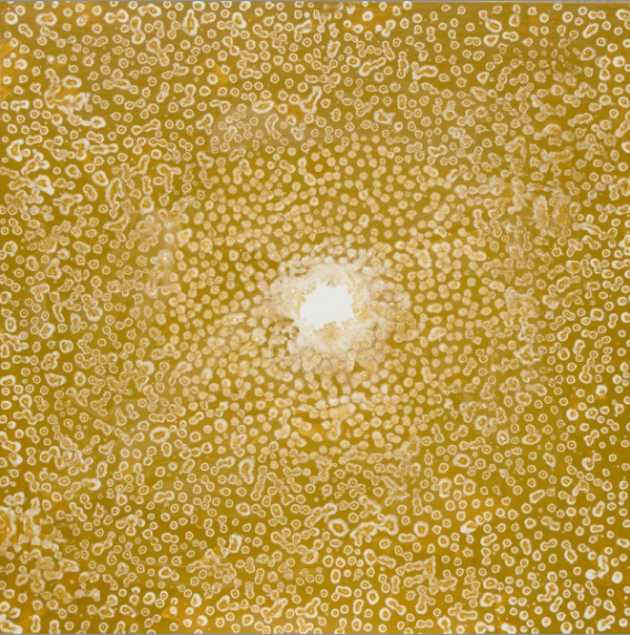 The Shape of Nature: Golden Dawn , acrylic on panel, 36 x 36 in.