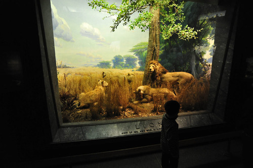 animal art book culture essay in postmodern reaktion