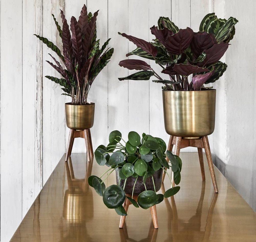 Brass pot on wooden stand - Forest and Co - from £60 (Small 21cm, M 38cm, L 52cm)