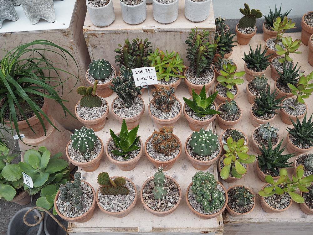 Kaktus, Copenhagen