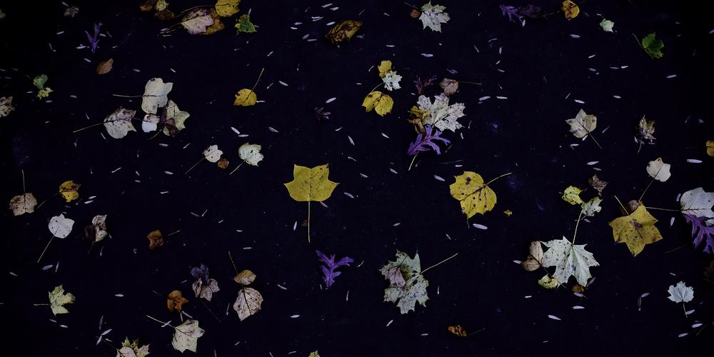 leaves fallen on blacktop