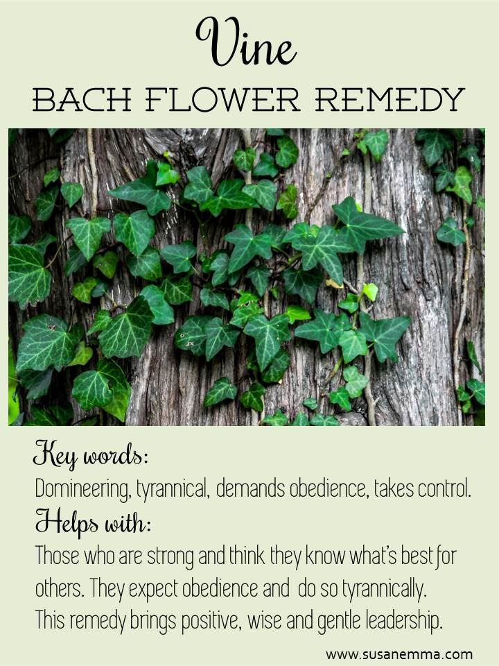 Bach Flower Remedies Vine for domineering