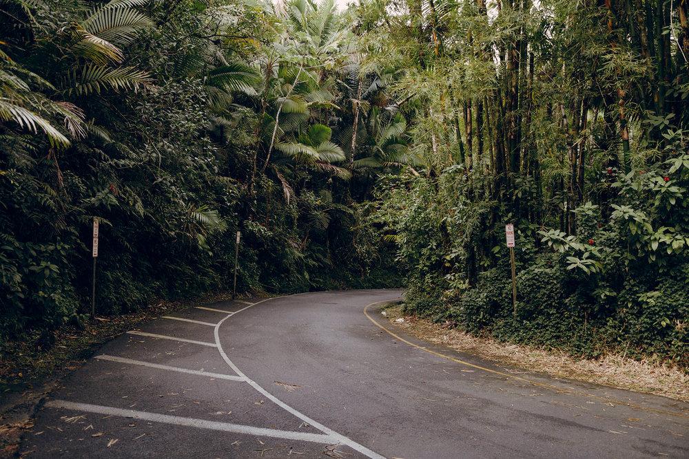 04 El Yunque around the bend.jpg