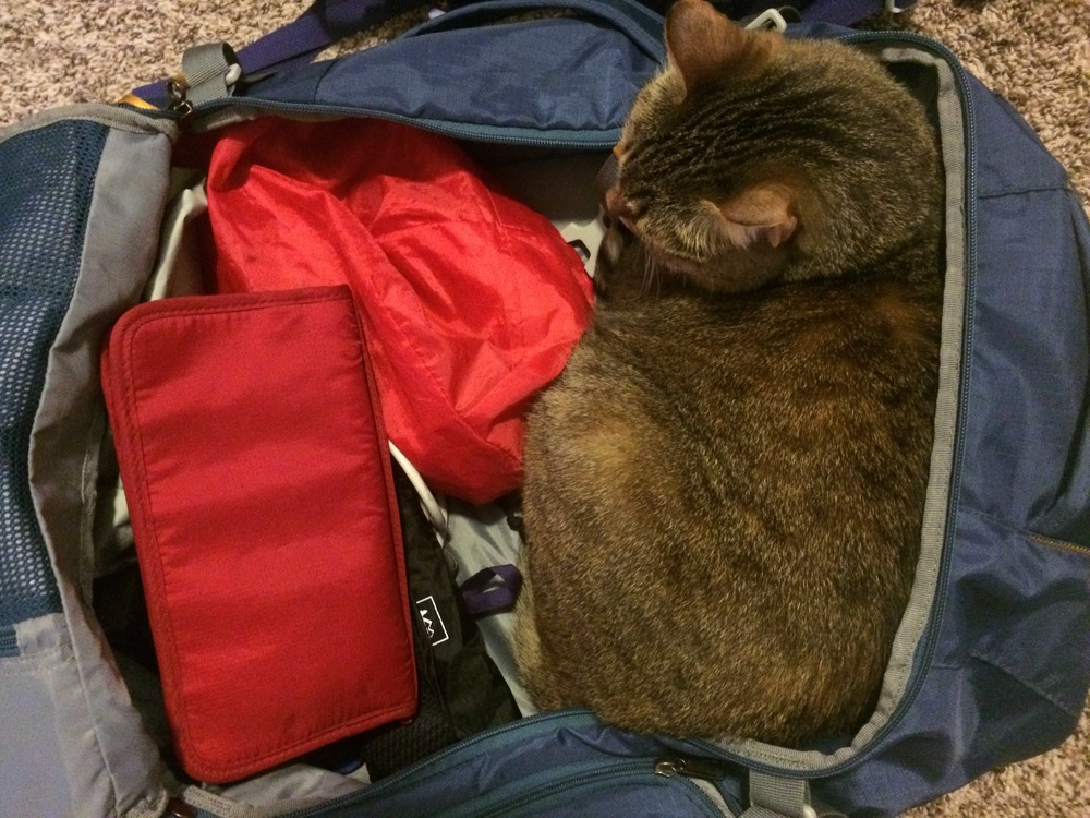 Sleek, portable, self-cleaning, self-packing... If that's not the ideal travel pet, what is?