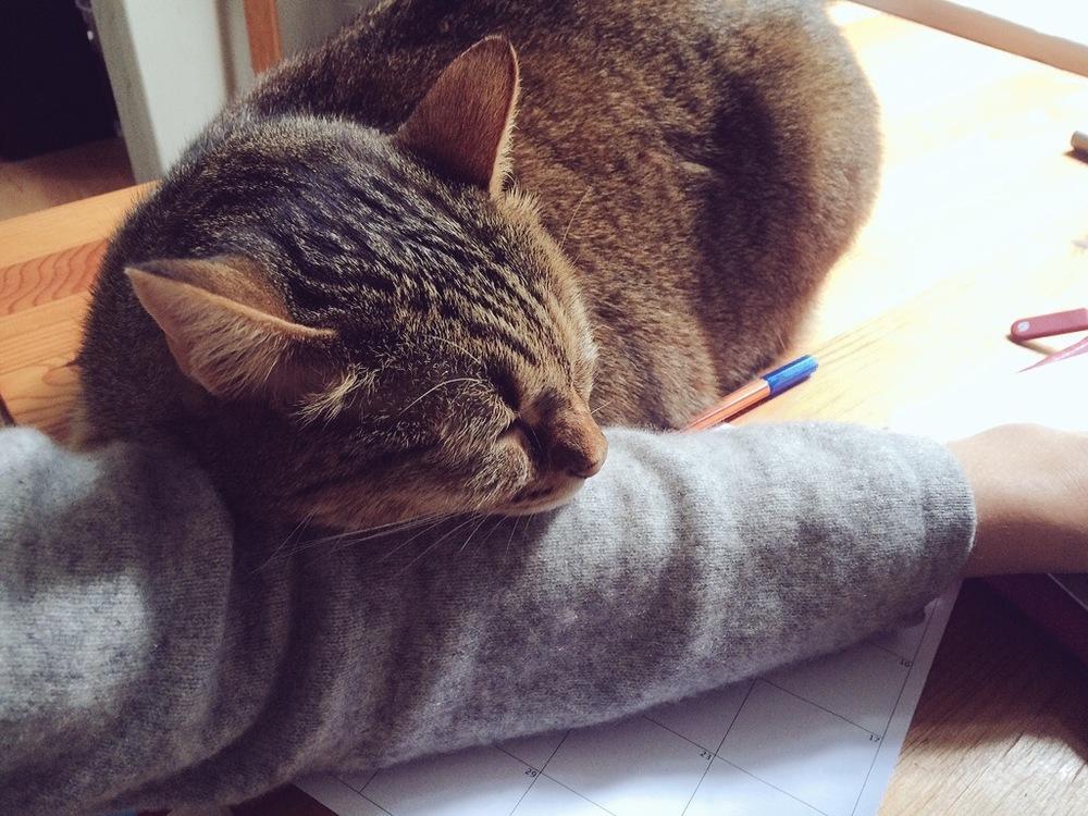 My faithful companion through the weary hours.