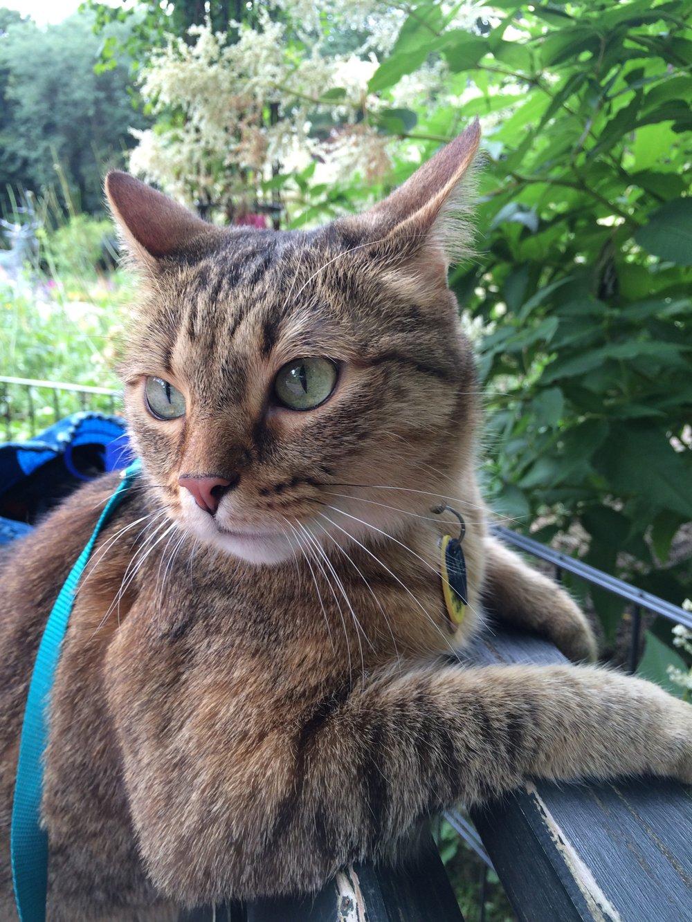 Aife Tiergarten Cat Eye.jpg