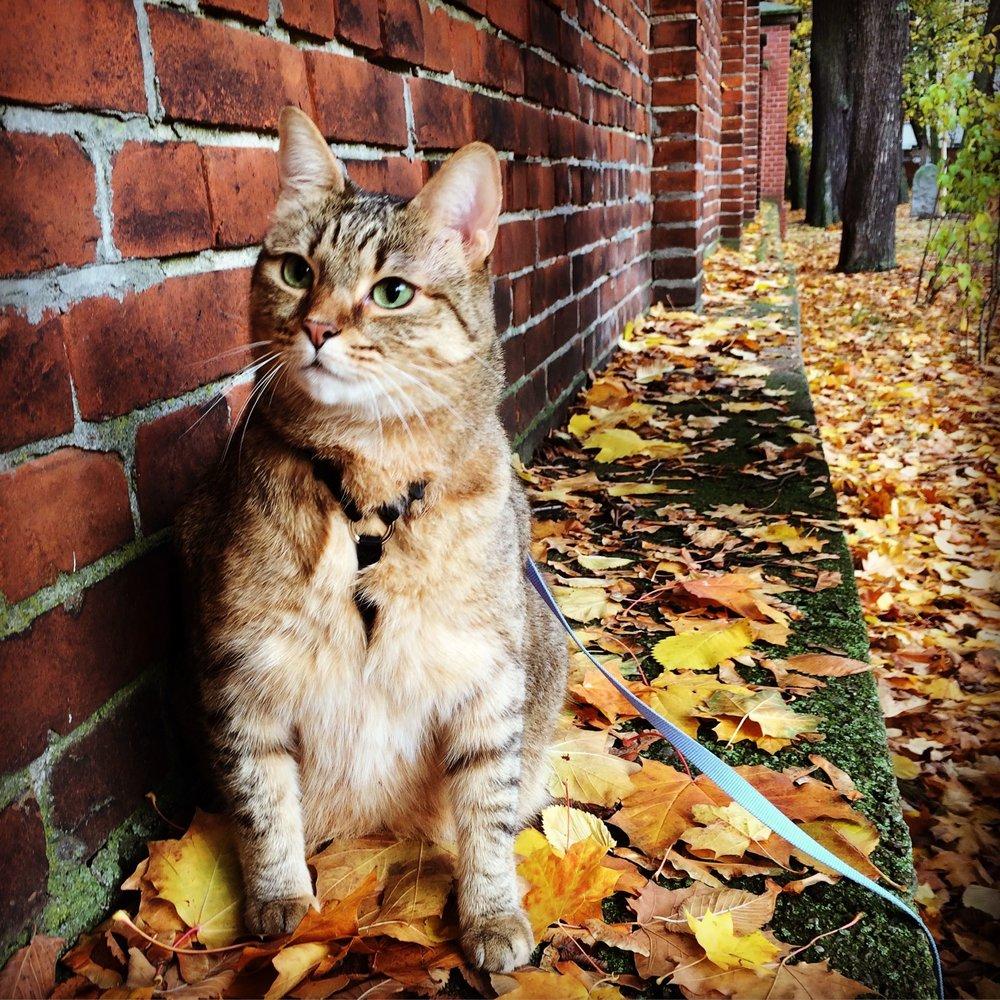 13 cat-schlep.jpg