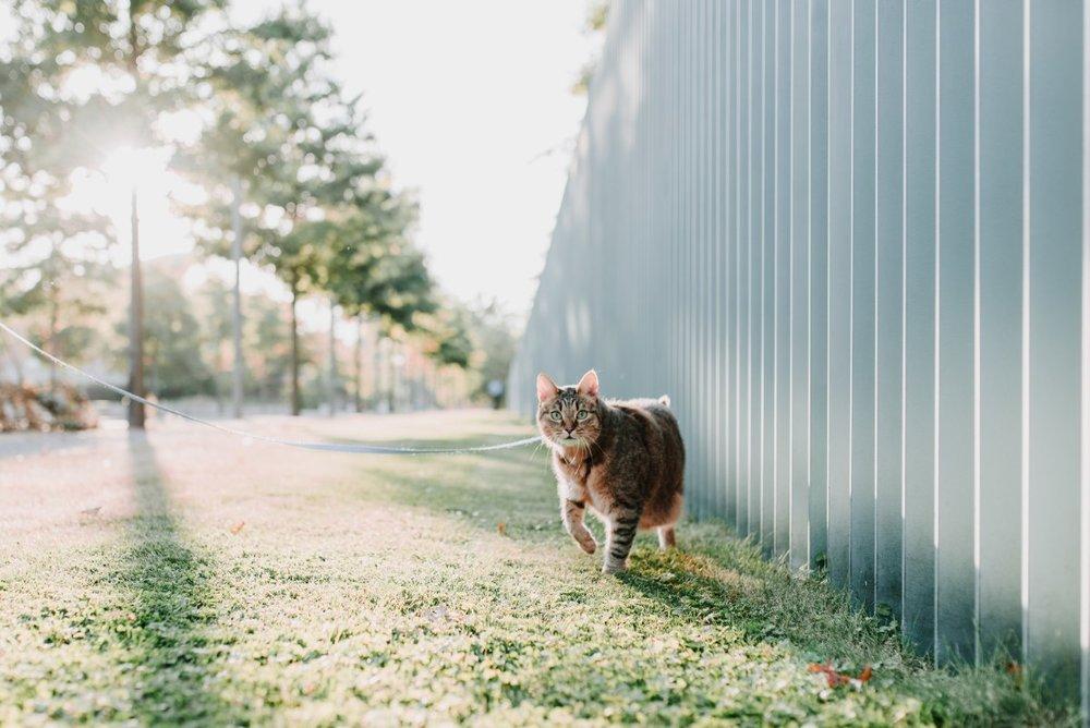 cat shot 12.jpg