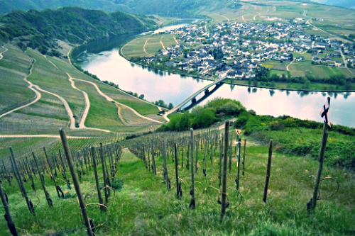 Mosel, Germany |  Late Winter 2014