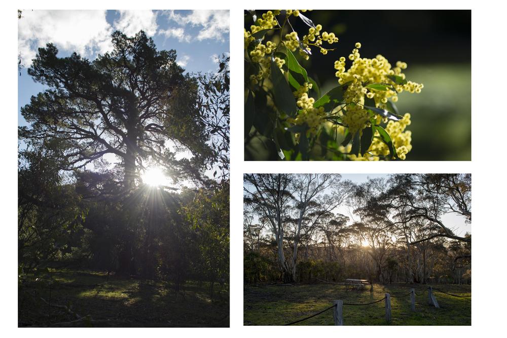 lightthroughtrees.jpg