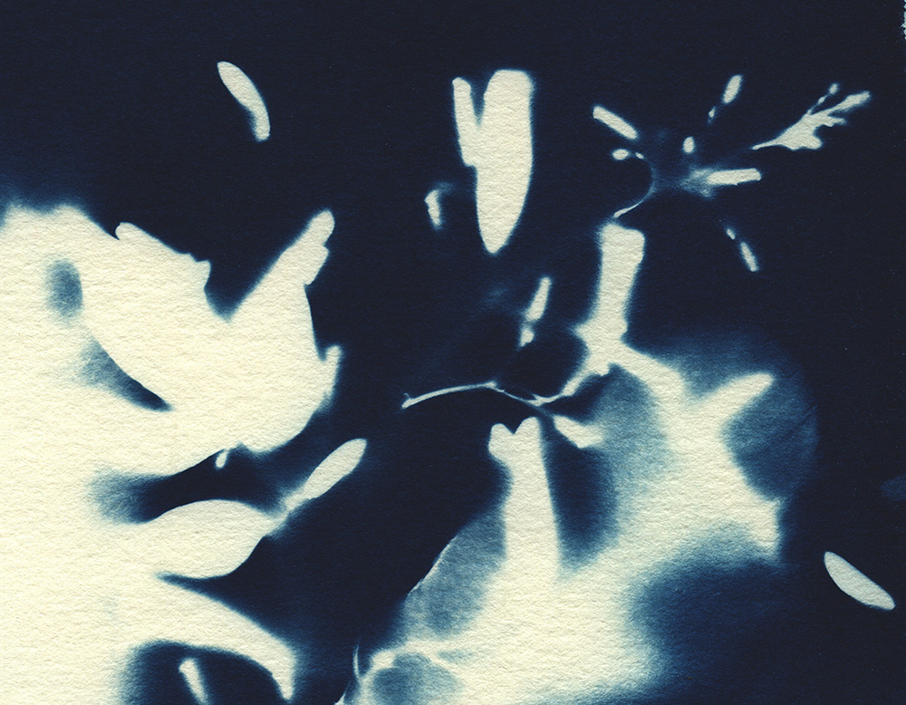 cyanotype_close up_web.jpg