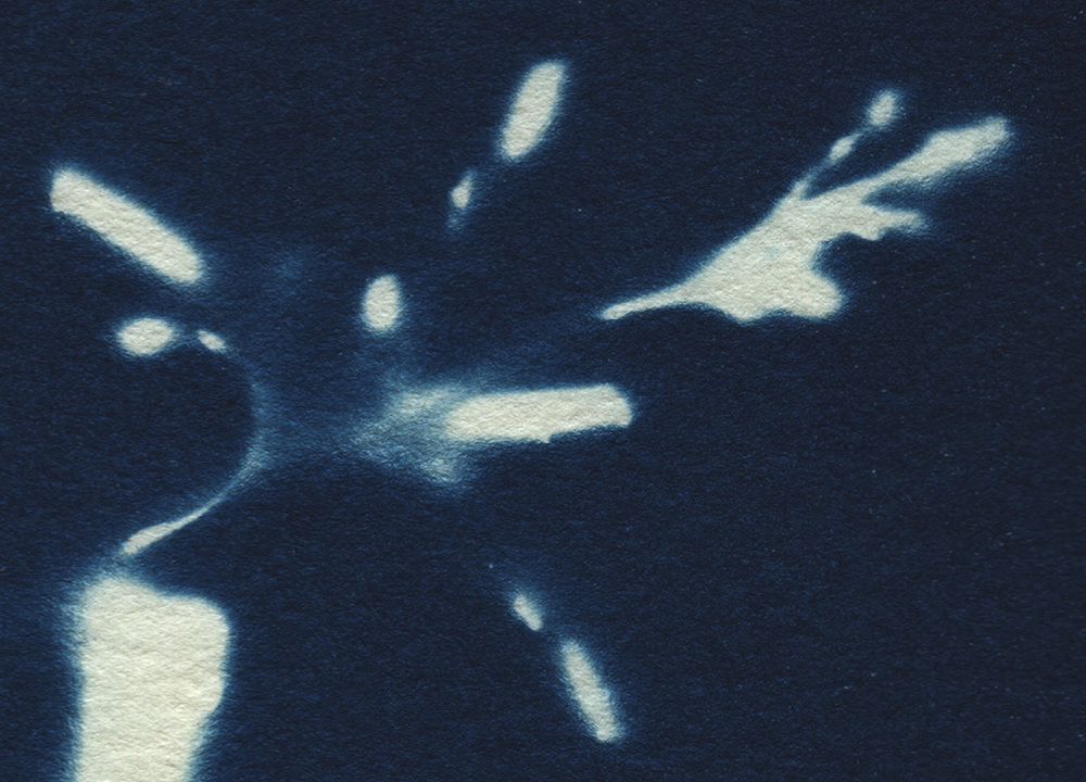 cyanotype_close up3.jpg