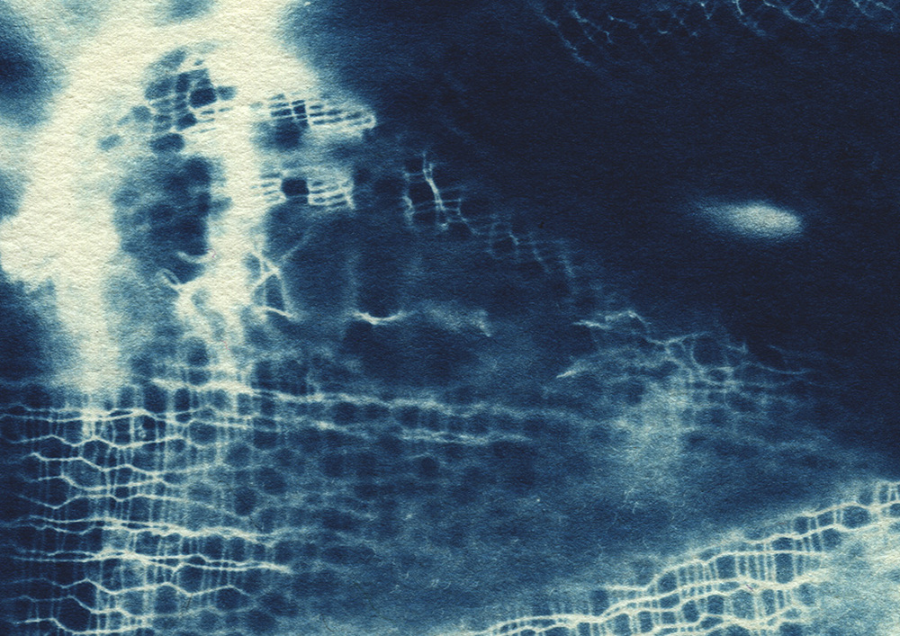 cyanotype_close up5.jpg