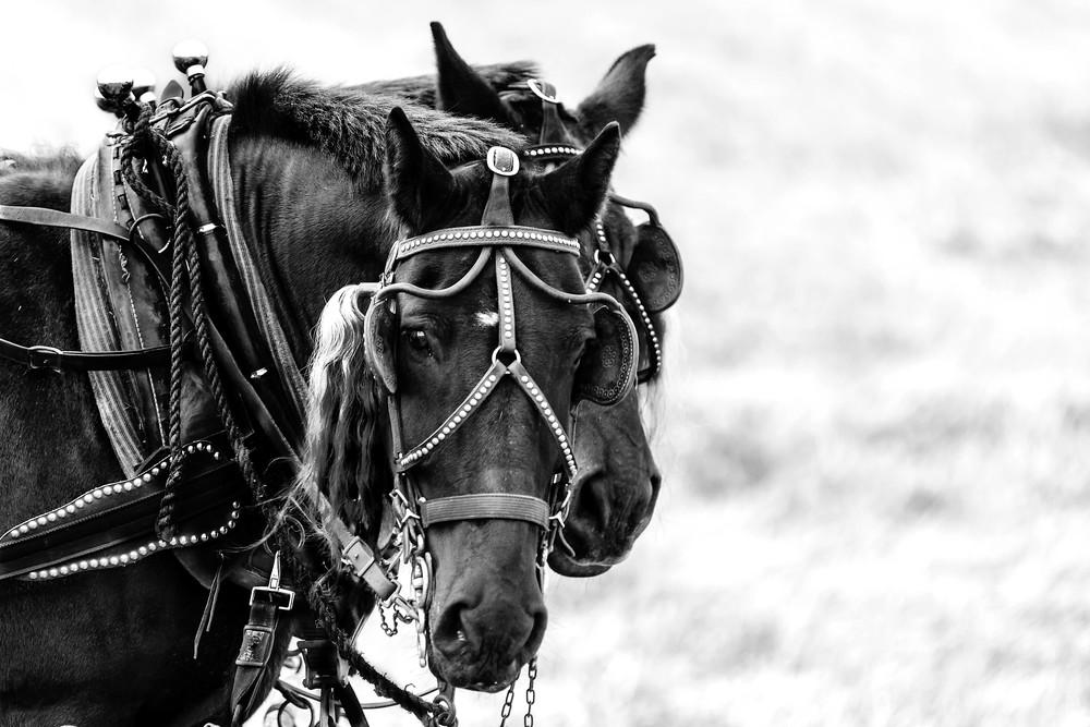 lea_malissa_Working Horses.jpg