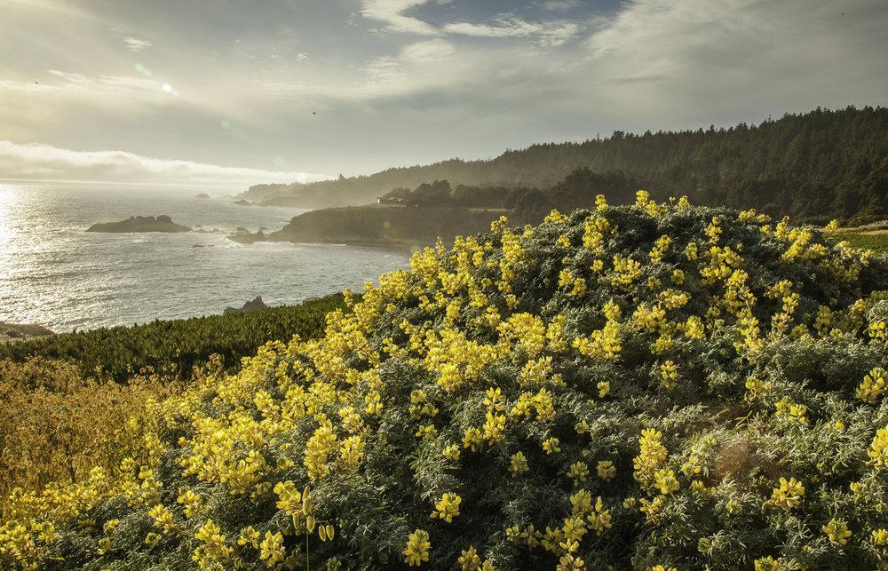 coastal-flowers_sm.jpg