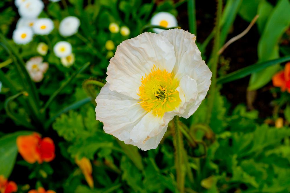 Vermeer_TheVermeerJump_Floral_20100508_003.jpg