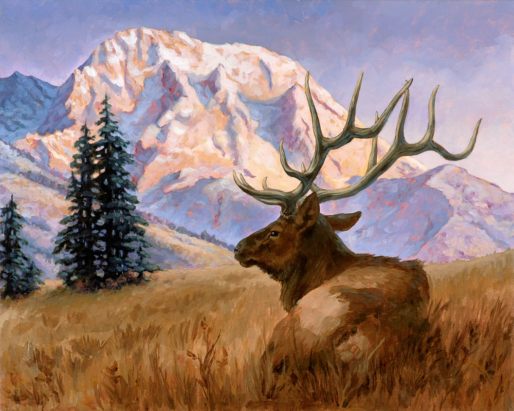 Teton Elk Repose at Sunset