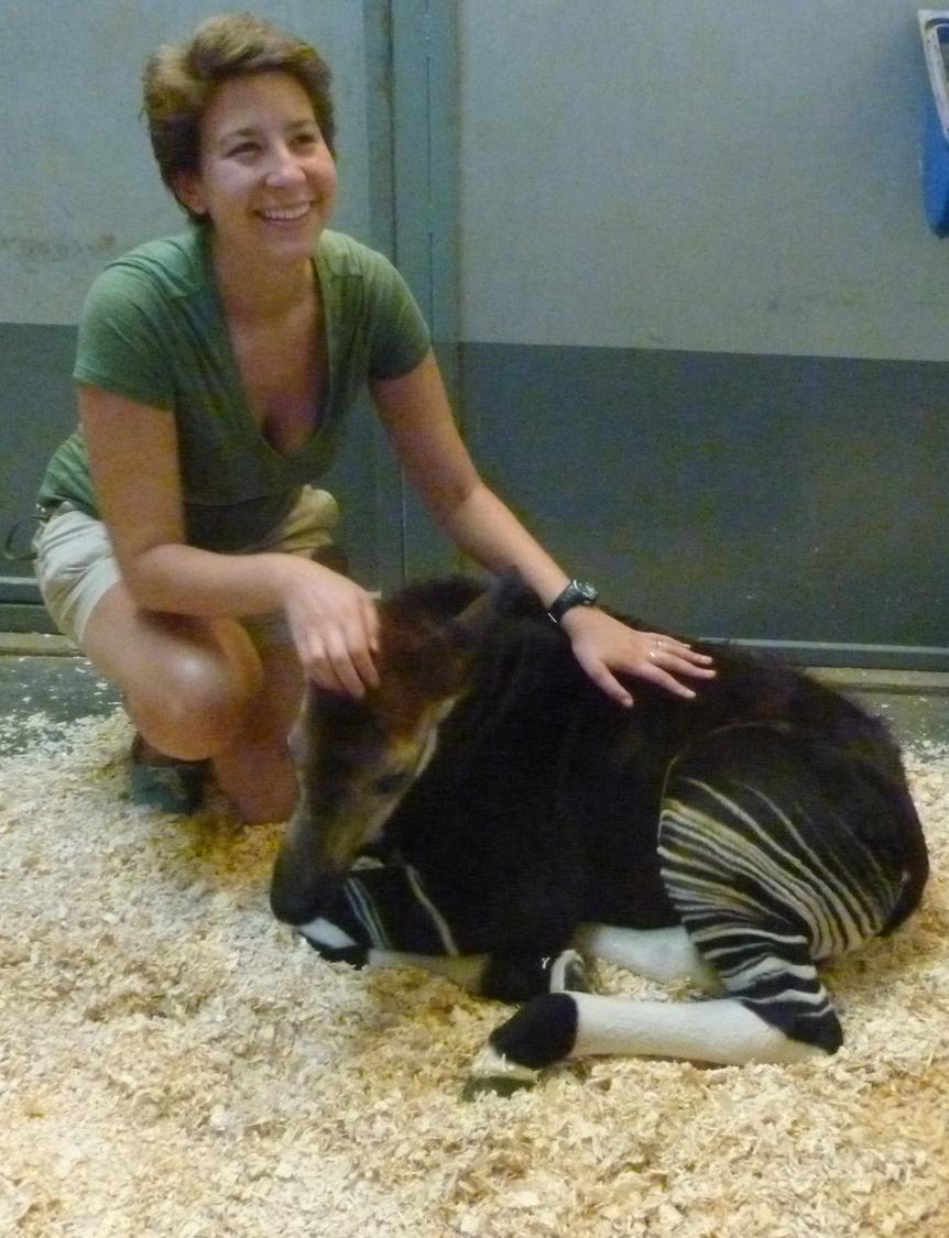 Baby Okapi 2012
