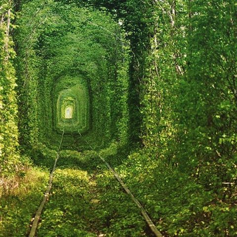 Tunnel of love #garden #inspiration #comingsoon #dulwichsecretgardenhouse #whosturnwasittocutthehedge?