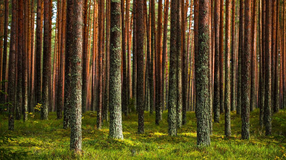 RMK Pähni Nature Centre, Estonia
