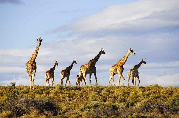 aquila-safari-near-cape-town-590x390.jpg