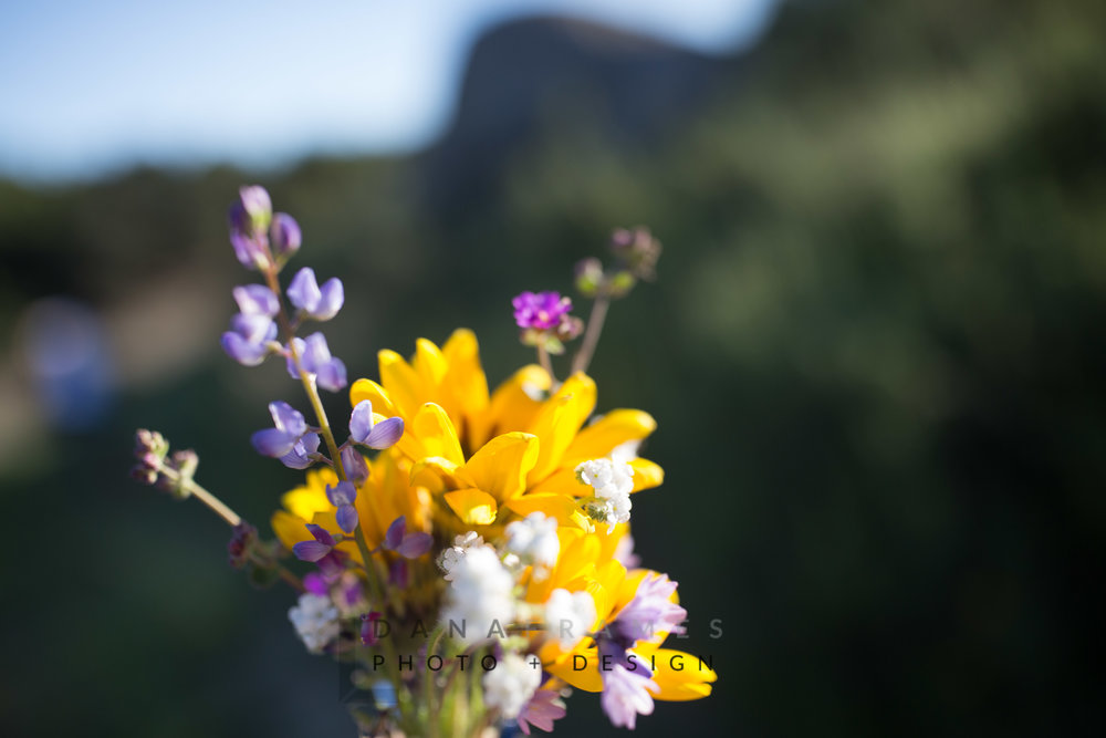Array of flowers on the hillside