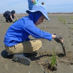 Volunteer Sebastien Nordenson planting beach grass on the dunes at Rockaway Beach. Photo by Danae Alessi.