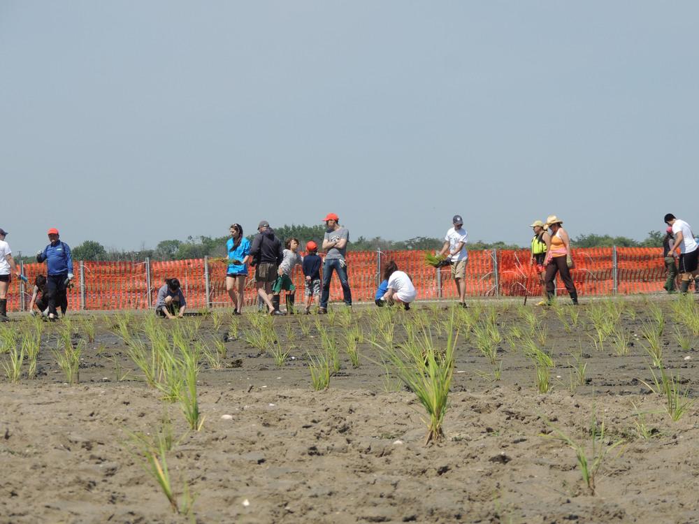 Planting 12.jpg