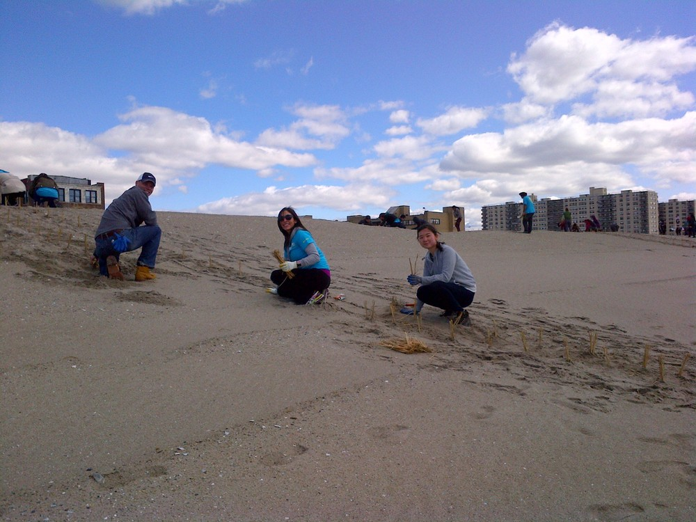 Volunteers plant beach grass to stabilize the dunes in Rockaway, which protects the shoreline from storm surges.